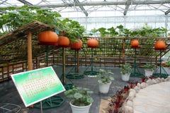 Giardino di bambù del melone Fotografia Stock Libera da Diritti