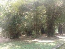 Giardino di bambù nel giardino botnical di Bali fotografia stock