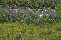Giardino di Butyful Fotografie Stock