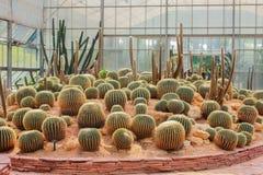 Giardino di Cactoo Fotografie Stock