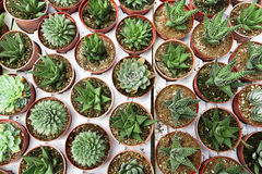 Giardino di Cactoo fotografia stock