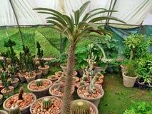 Giardino di Cactoo fotografie stock libere da diritti