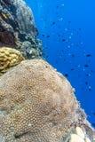 Giardino di corallo Bali subacqueo immagini stock libere da diritti