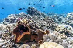Giardino di corallo Bali subacqueo fotografia stock libera da diritti