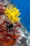 Giardino di corallo Bali subacqueo fotografia stock