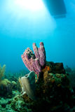 Giardino di corallo con la barca qui sopra fotografie stock libere da diritti