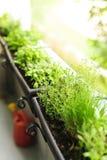 Giardino di erba del balcone Fotografie Stock Libere da Diritti