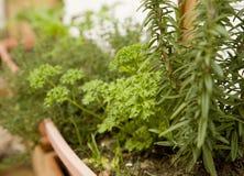 Giardino di erba organico conservato in vaso immagini stock libere da diritti