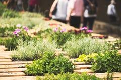 Giardino di erbe immagini stock