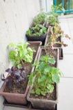 Giardino di erbe del balcone immagine stock