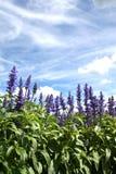 Giardino di estate Immagini Stock