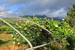 Giardino di Farmer's Immagini Stock Libere da Diritti