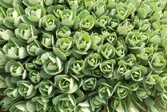 Giardino di fiore della sorgente Immagine Stock Libera da Diritti