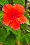 Giardino di fiore in Tailandia Immagini Stock