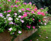 giardino di fiori Immagine Stock Libera da Diritti