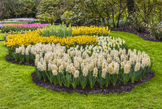 Giardino di fiori Fotografia Stock Libera da Diritti