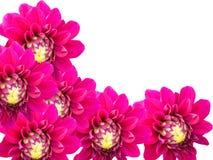 Giardino di fiori decorativo su una priorità bassa bianca Immagini Stock