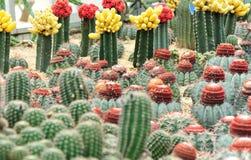 Giardino di fiori del cactus fotografia stock