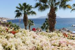 Giardino di fiori variopinto Fotografia Stock