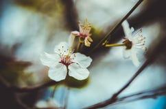 Giardino di fioritura Fotografie Stock