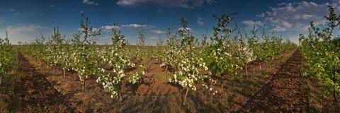 Giardino di fioritura Immagini Stock
