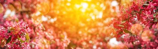 Giardino di fioritura della molla un giorno soleggiato fotografie stock libere da diritti