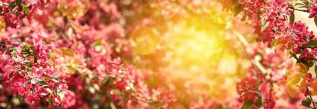 Giardino di fioritura della molla un giorno soleggiato fotografie stock