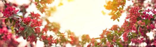 Giardino di fioritura della molla un giorno soleggiato fotografia stock