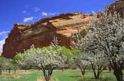 Giardino di Fruita in Canyonlands Fotografie Stock Libere da Diritti