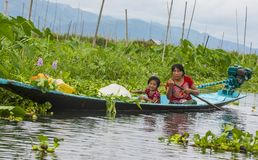 Giardino di galleggiamento del Myanmar del lago Inle Fotografie Stock