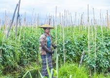 Giardino di galleggiamento del Myanmar del lago Inle Immagini Stock Libere da Diritti