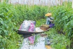 Giardino di galleggiamento del Myanmar del lago Inle Immagine Stock
