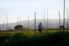 Giardino di galleggiamento sul lago Inle, condizione dello Shan, Myanmar Immagini Stock