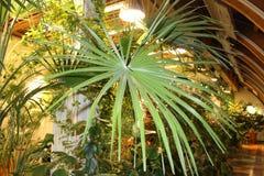 Giardino di inverno con una palma Immagini Stock Libere da Diritti