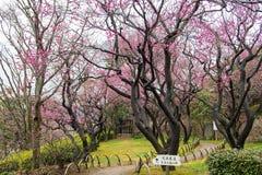 Giardino di Kairakuen Fotografia Stock