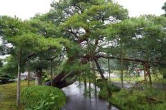 Giardino di Kanazawa Fotografia Stock Libera da Diritti