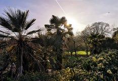Giardino di Kew a Richmond, Londra immagini stock libere da diritti