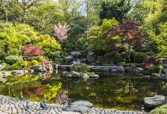 Giardino di Kyoto Immagini Stock