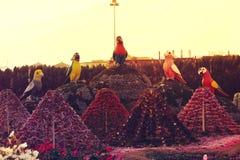 Giardino di miracolo del Dubai Immagini Stock Libere da Diritti