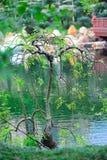 Giardino di Nan Lian Fotografia Stock