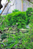Giardino di Nan Lian Fotografia Stock Libera da Diritti