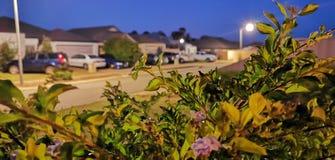 Giardino di notte immagini stock libere da diritti