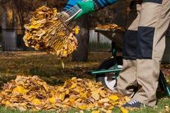 Giardino di pulizia del giardiniere durante l'autunno Immagini Stock