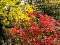 Giardino di Rikugien Posto famoso per guardare i colori di autunno a Tokyo, Giappone Immagine Stock
