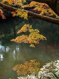 Giardino di Rikugien Posto famoso per guardare i colori di autunno a Tokyo, Giappone Fotografia Stock