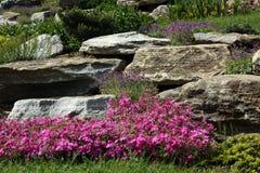 Giardino di rocce con le piante perenni di fioritura Immagine Stock