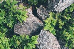 Giardino di rocce di stile giapponese con la pietra decorativa fotografia stock