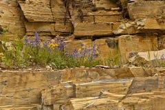 Giardino di roccia Immagini Stock Libere da Diritti