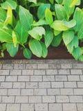 Giardino di sera in Bintaro Fotografia Stock