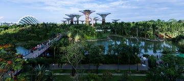 Giardino di Singapore dalla baia Fotografia Stock